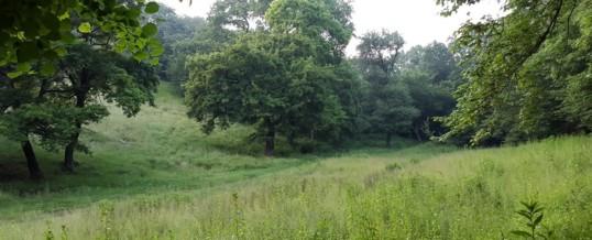 Pădurea Babadag – Arie de protecție specială avifaunistică (SPA)
