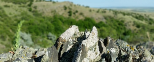 Stepa Casimcea – Arie de protecție specială avifaunistică (SPA)