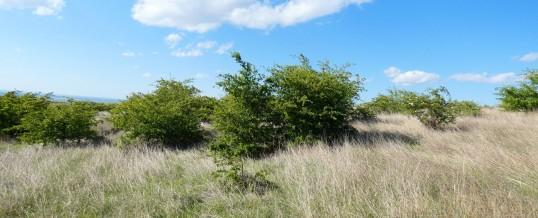 Habitat din Podișul Nord Dobrogean, 40C0*