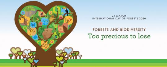21 martie: Ziua internaţională a pădurilor