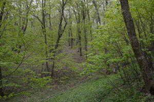 91M0 Păduri panonice-balcanice de stejar turcesc