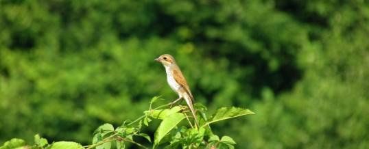 10 mai: Ziua păsărilor și arborilor