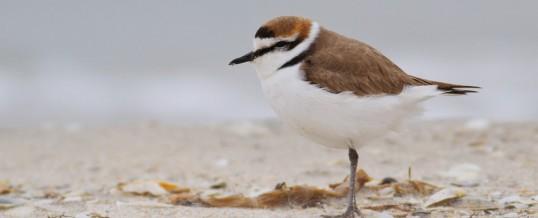 1 aprilie: Ziua internațională a păsărilor