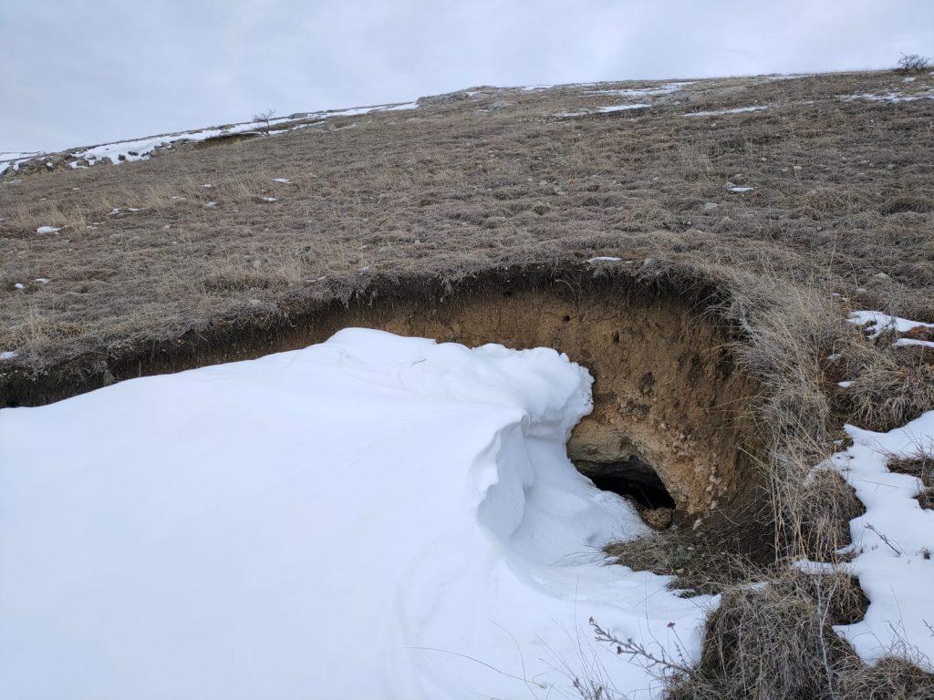 Grotă hibernare Podișul Nord Dobrogean