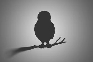Hieraaetus pennatus – acvila mică